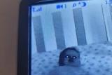 Мать посмотрела на монитор и увидела ребенка
