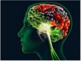 Как улучшить работу мозга и памяти?